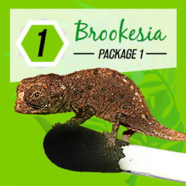 custom logo design thailand, koh samui, package brookesia