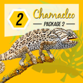 standard logo design thailand, koh samui, chameleon production