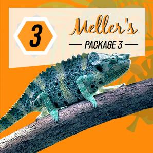 affordable logo design mellers package, thailand, koh samui